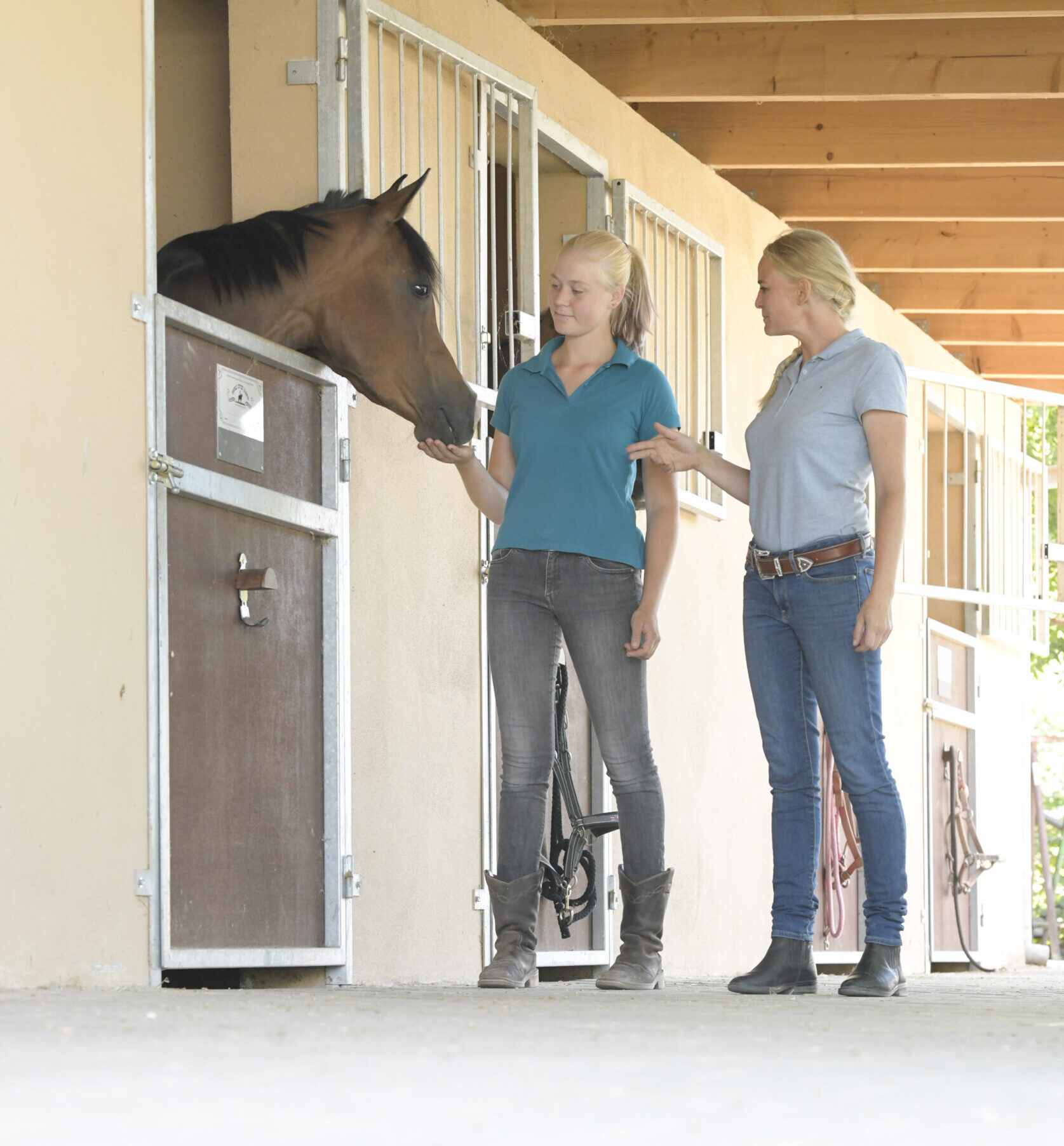 Vom Traum zur Realität: Wie findet man das passende Pferd?